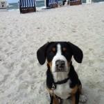 Mit dem Hund im Nordseeurlaub