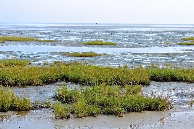 Wattenmeer mit Gräsern