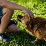 Junge mit Familienhund