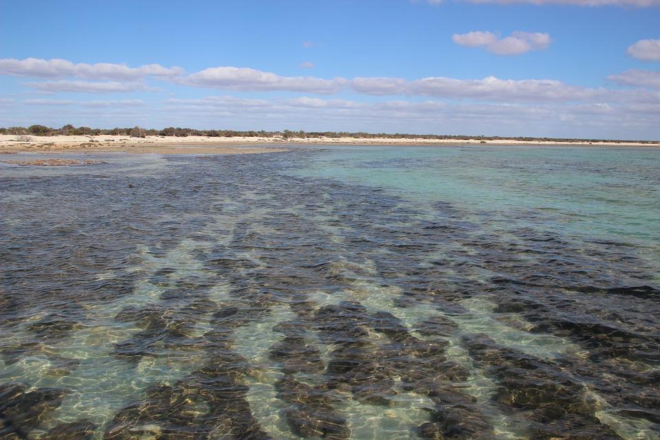 Australien Shark Bay