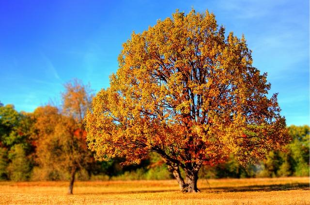 Wohnmobil Herbstausflug? Unsere Top-Ziele in diesem Jahr