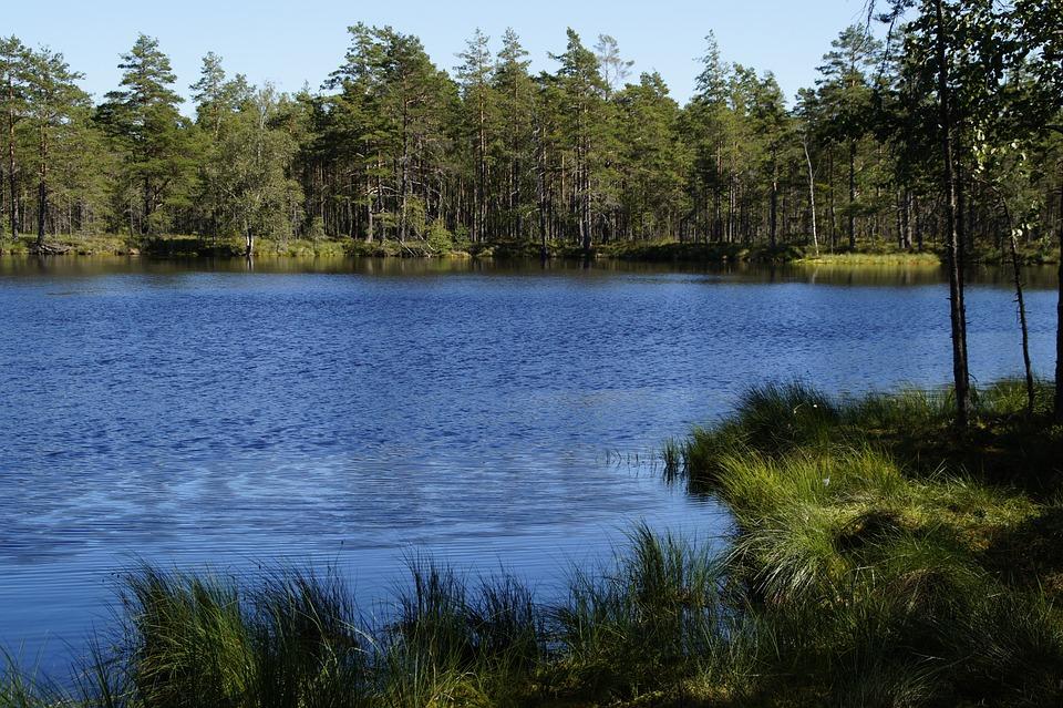 Schwedisches Moor