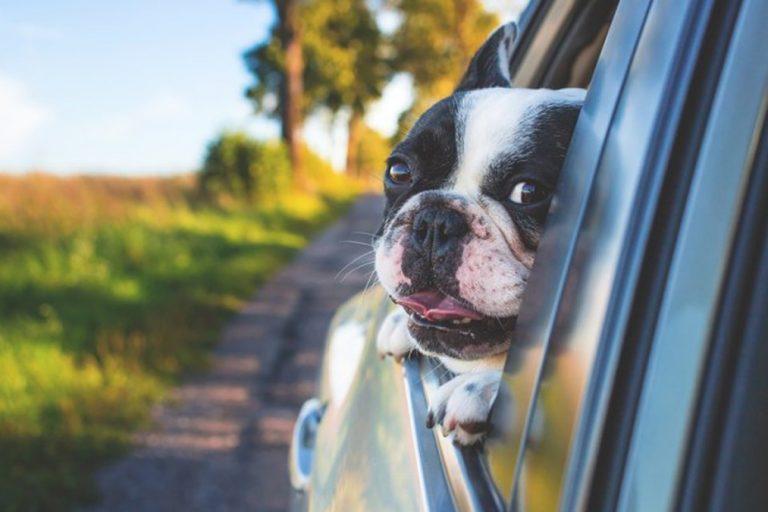 Wohnmobilurlaub mit Hund – Alle Infos auf einen Blick