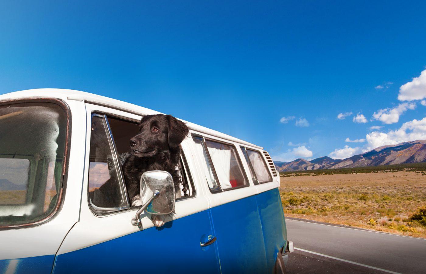 Hunde können im Wohnmobil überall hin mitreisen