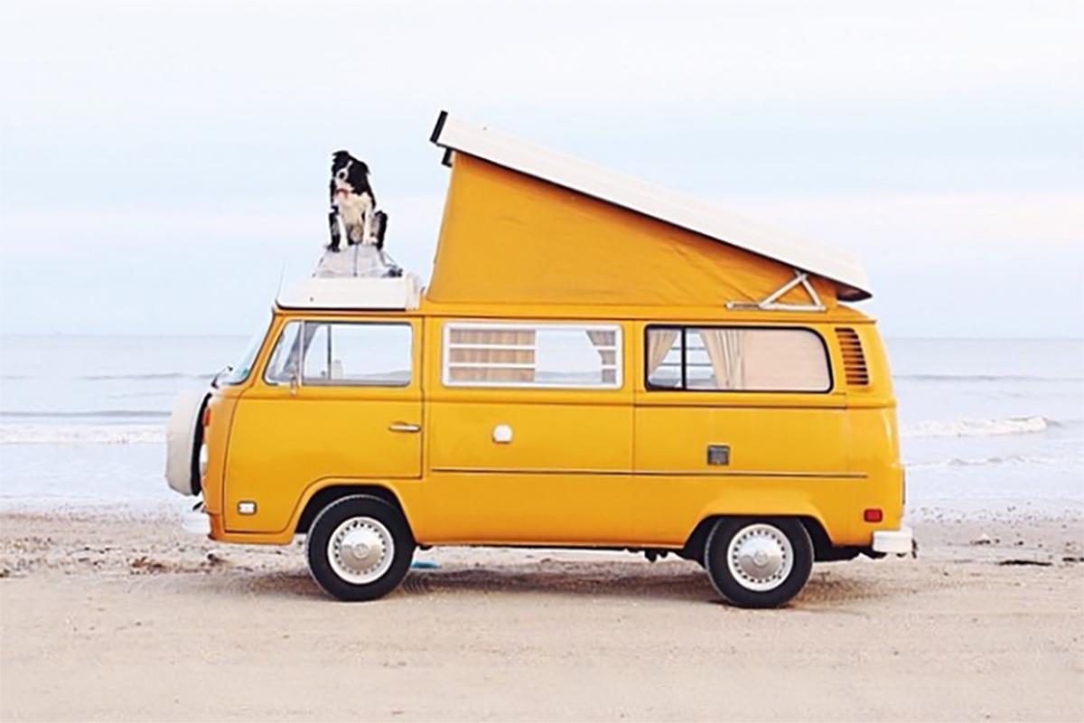 Mit dem Haustier auf Reisen: Camping ist dafür bestens geeignet.