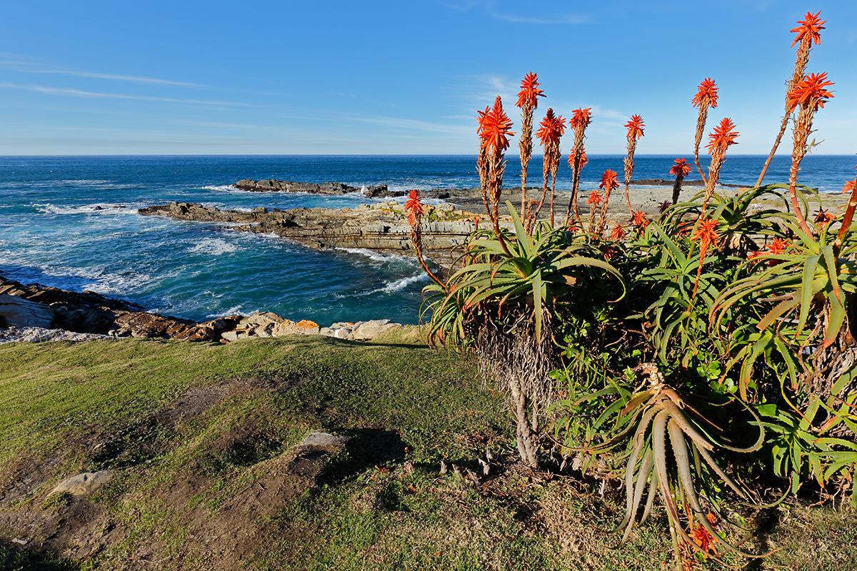 Küstenlandschaft auf Teneriffa