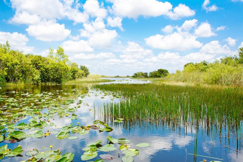 Fluss im Everglades Nationalpark.