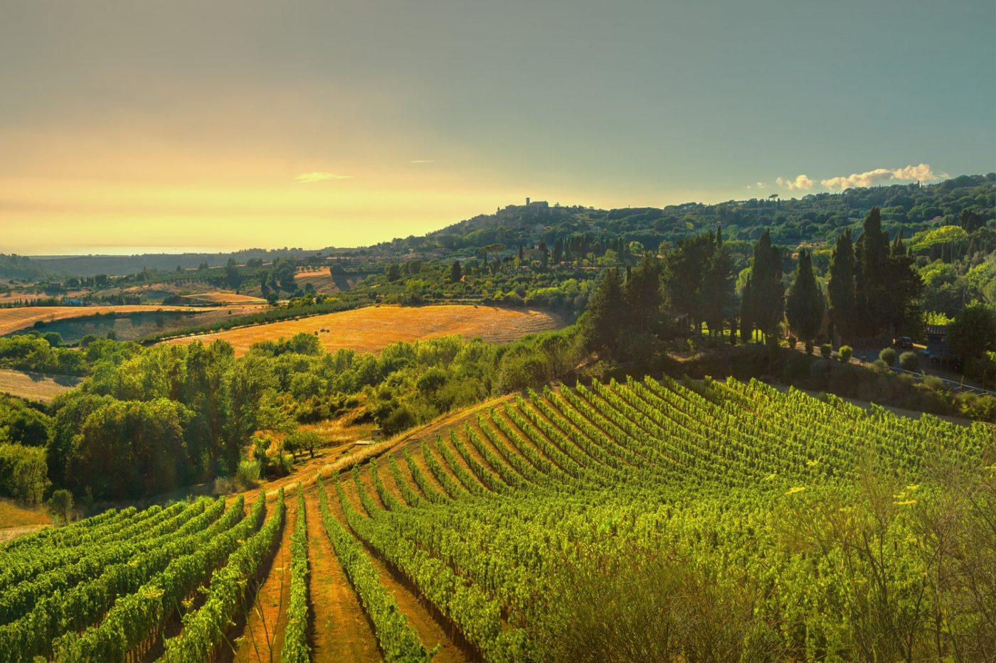 Ein Weinberg in Italien.