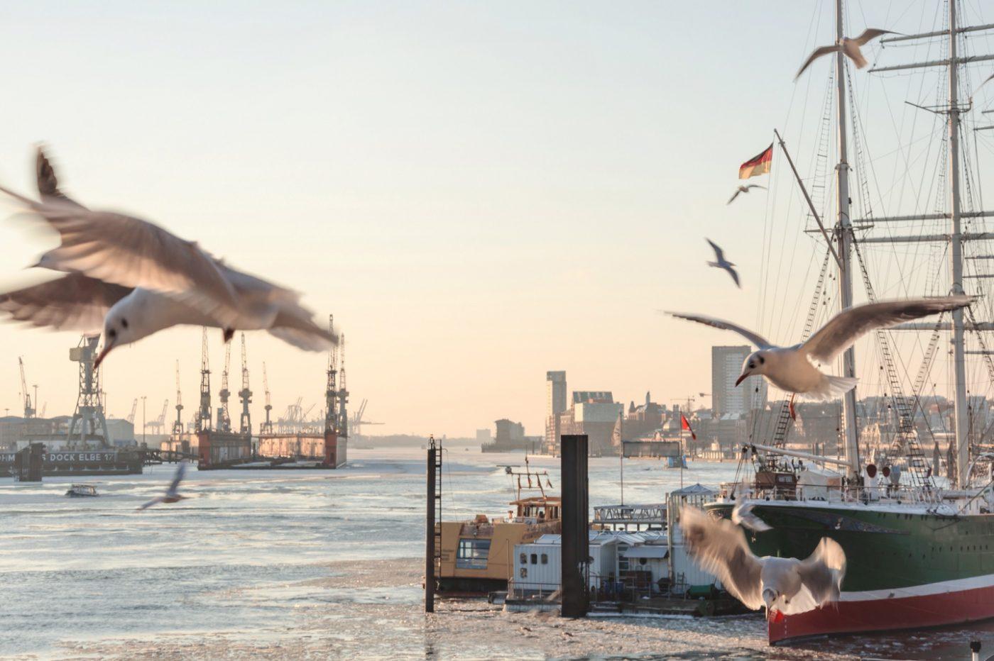 Möwen am Hamburger Hafen.