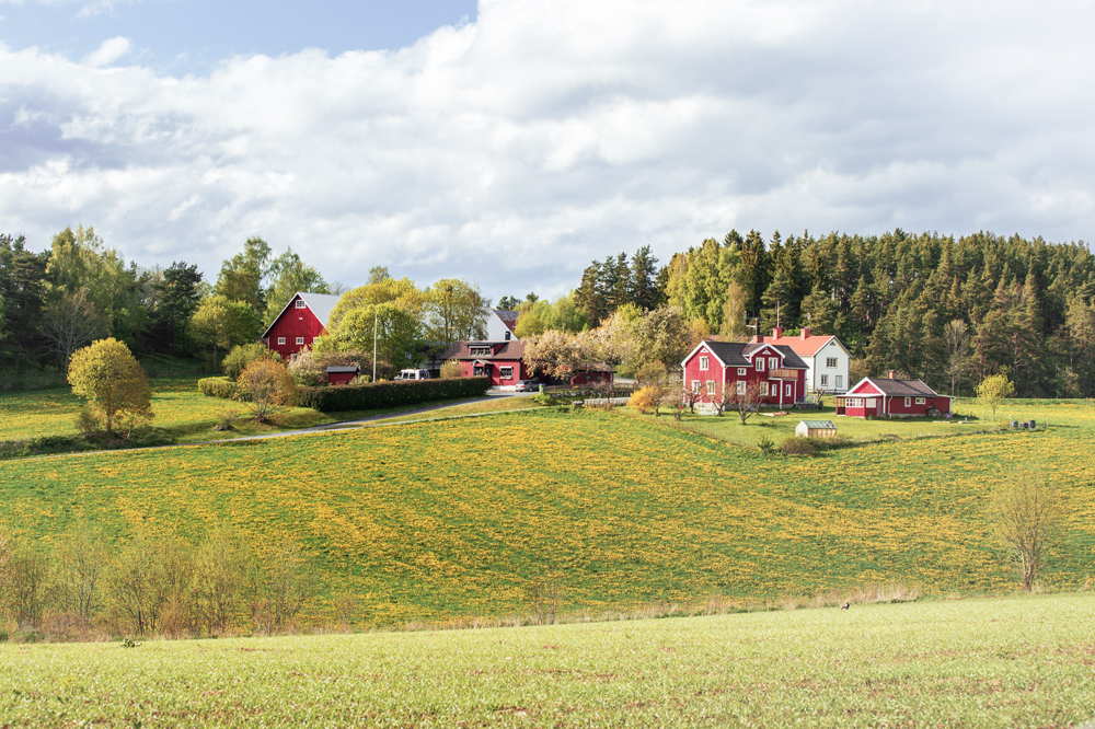 Rote Häuser, wie sie typisch für Schweden sind, auf einer Wiese.