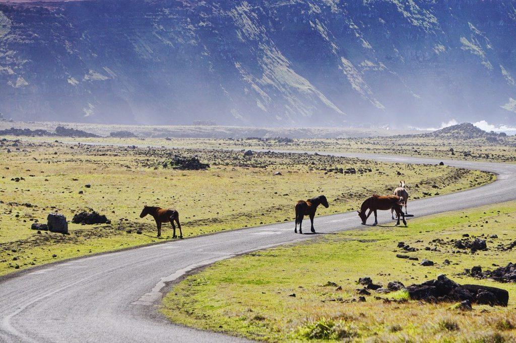 Pferde auf Straße in Chile