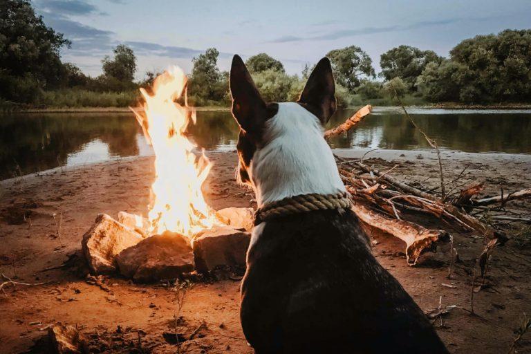 Camping mit Hund: Checkliste und 3 Tipps für eine entspannte Reise